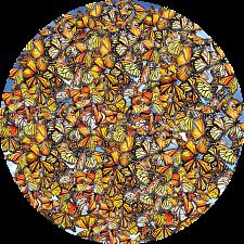 Monarch Frenzy -