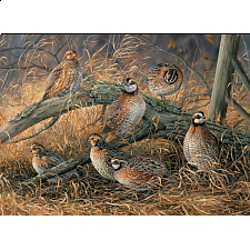 Quail - Search Results