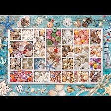 Seashell Collection -