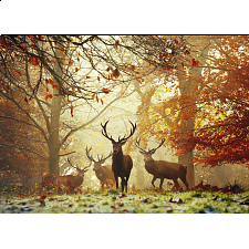 Magic Forests: Stags - 1000 Pieces