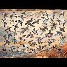 Ducks of North America - Search Results