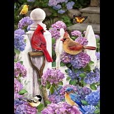 Cardinals & Friends -