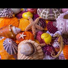 Sea Shell Treasures -