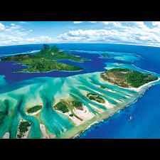 Coral Reef -