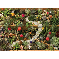 Succulent Garden - Search Results