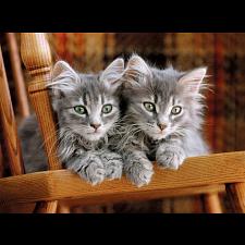Kittens -