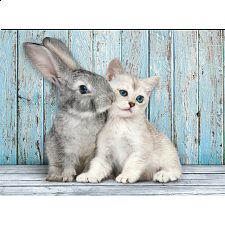 Cat & Bunny -