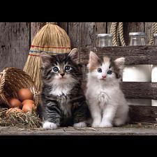 Lovely Kittens -