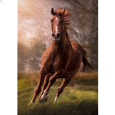 The Horse -
