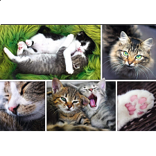 Just Cat Things - Collage -