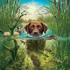 Mark Fredrickson: Labrador - Search Results