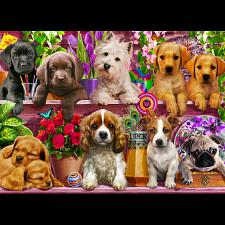 Puppies Galore -