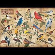 Popular Backyard Wild Birds of North America -