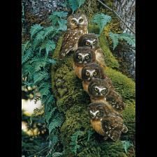 Family Tree -