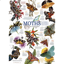 Moth Collection -