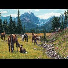 Horse Meadow -