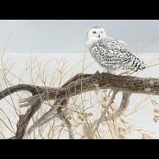 Fallen Willow Snowy Owl - Large Piece -