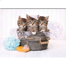 Kittens and Soap -