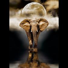 The Elephant -