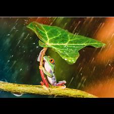 Green Umbrella -