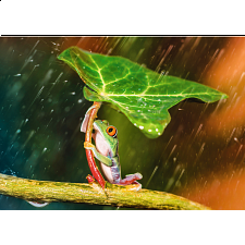 Green Umbrella -
