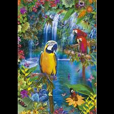 Bird Tropical Land -