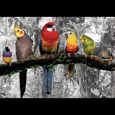 Birds in the Jungle -