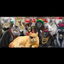Cat Lineup -