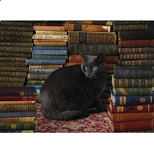 Library Cat -