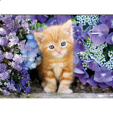 Ginger Cat in Flowers - Square Box -