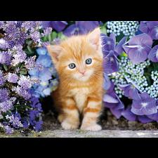 Ginger Cat - Rectangle Box -