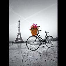 Romantic Promenade in Paris -