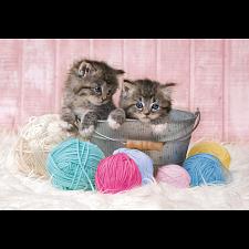 Sweet Kittens -