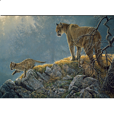 Excursion - Cougar and Kits - Family Pieces Puzzle -