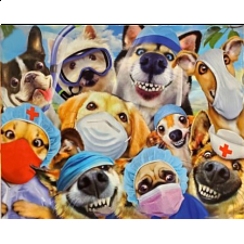 Selfies: Dog Doctors -
