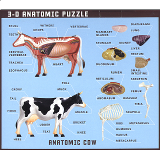 Anatomic Cow Puzzle