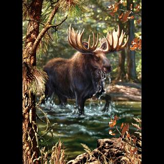 Peek Season - Moose Crossing