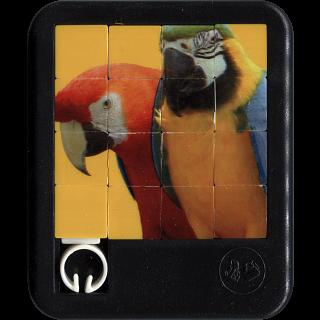 Brilliant Creatures - Parrots