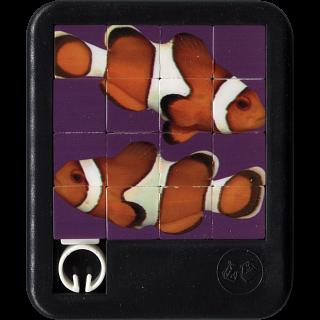 Brilliant Creatures - Clown Fish