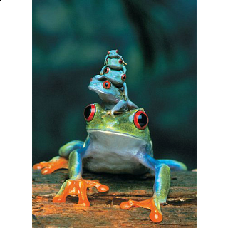 Mini Puzzle - Red-Eyed Tree Frog