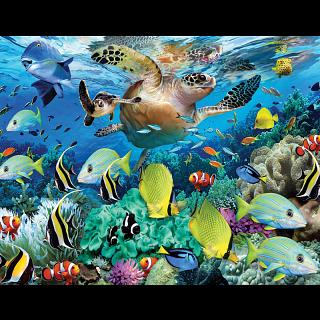 Mini Puzzle - The Journey of the Sea Turtle