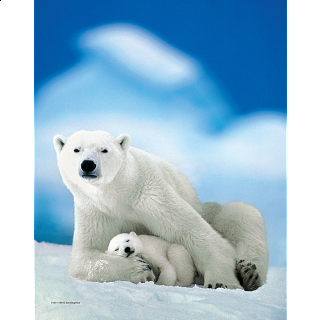 Mini Puzzle - Polar Bear & Baby