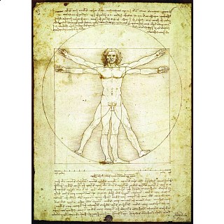 Da Vinci - The Vitruvian Man