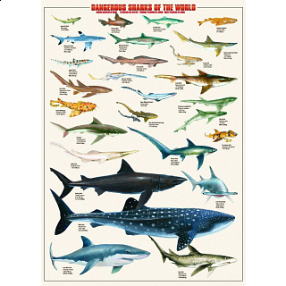 Dangerous Sharks of the World