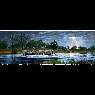 AVH Panorama: Herd of Elephants