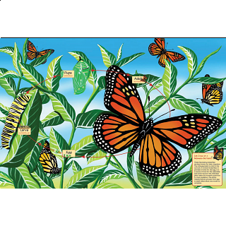 Floor Puzzle: Life Cycle of a Monarch Butterfly