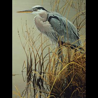 Great Blue Heron - Large Piece