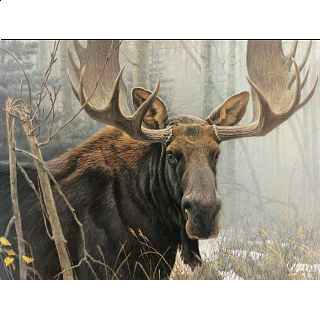 Bull Moose - Large Piece