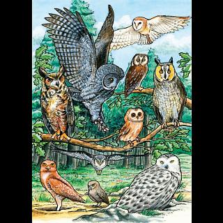 North American Owls - Tray Puzzle