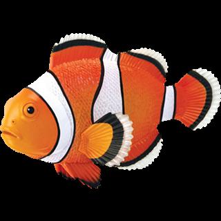 4D Puzzle - Clownfish